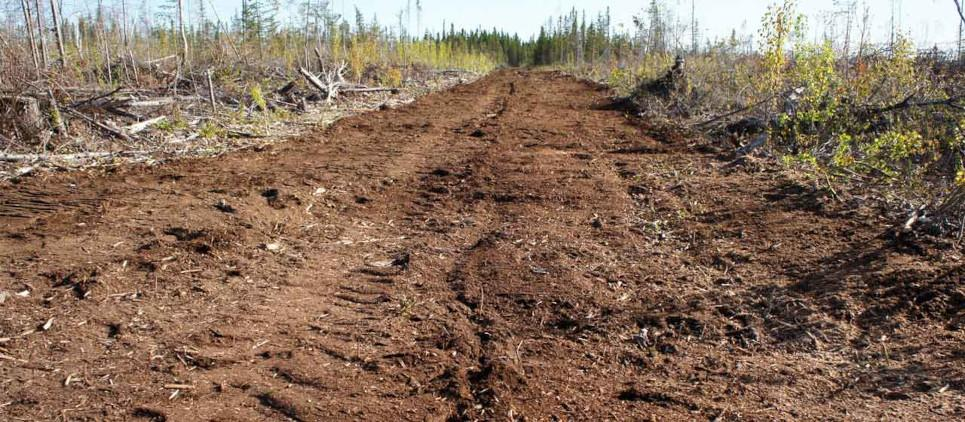 Le trinciatrici della linea WBS fh sono utili in agricoltura, gestione ambientale, manutenzione delle strade, pulizie dei pascoli e boschi